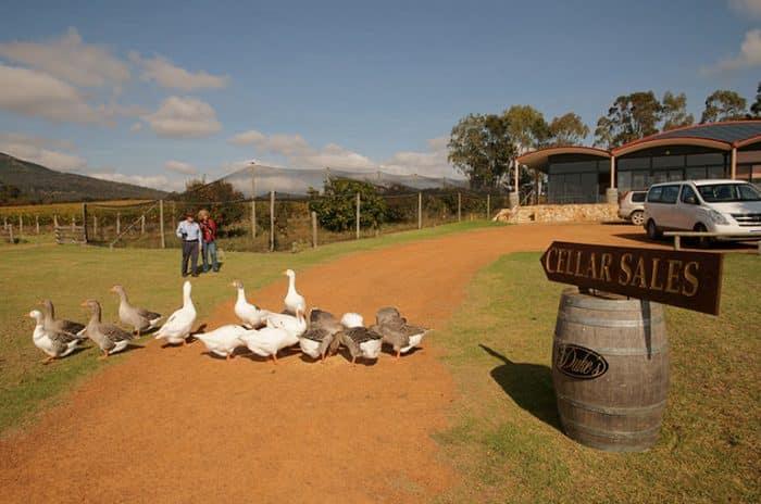 Wineries - Dukes Winery Porongurups - Great Southern Treasures-Tourism WA