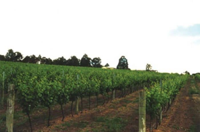 Wineries - Frankland Winery - Great Southern Treasures-Tourism WA