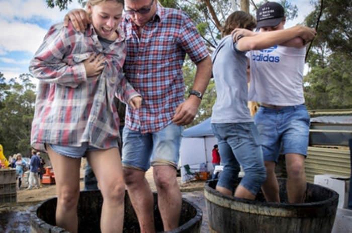 Wineries - Porongurup Festival - Great Southern Treasures-Tourism WA