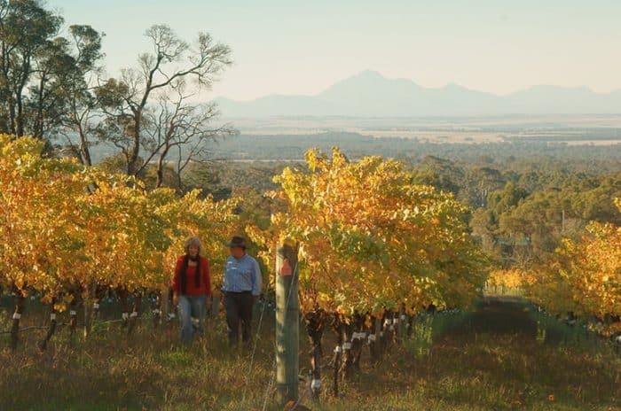 Wineries - Porongurup Vinyards - Great Southern Treasures-Tourism WA