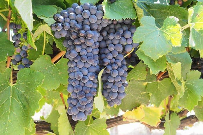 Wineries - Great Southern Treasures-Tourism WA